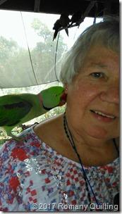 Parrot on Jenny