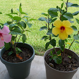 Gardening 2010, Part Three - 101_4813.JPG