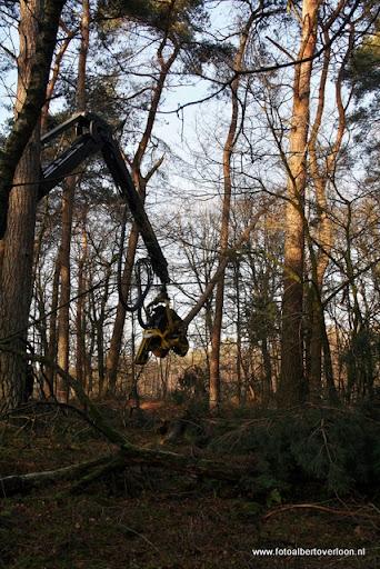 Houtoogst in de bossen van overloon 17-01-2012 (4).JPG