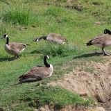 05-11-12 Wildlife Prairie State Park IL - IMGP1560.JPG