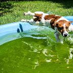 w basenie (5).jpg