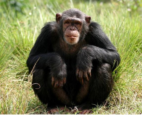 most intelligent animals