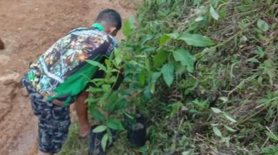 Gerakan Percantik Desa, Satgas TMMD Kodim Tapsel  Bagikan Bibit Buah ke Warga Desa Siuhom