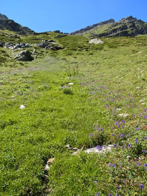 Biotope de Parnassius (Driopa) nordmanni. Cheget (Terskol), 2750 m (Kabardino-Balkarie), 8 août 2014. Photo : J. Michel