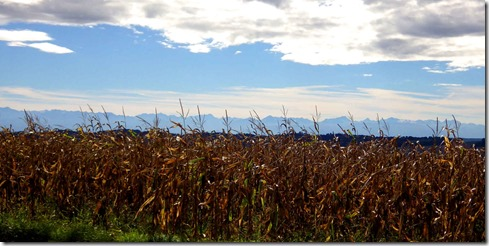 Maize and Mountains