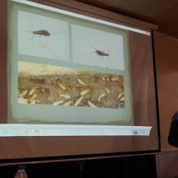 Xavier Canyelles Ferrà-Relació insectes-ésser humà (etnientomologia)