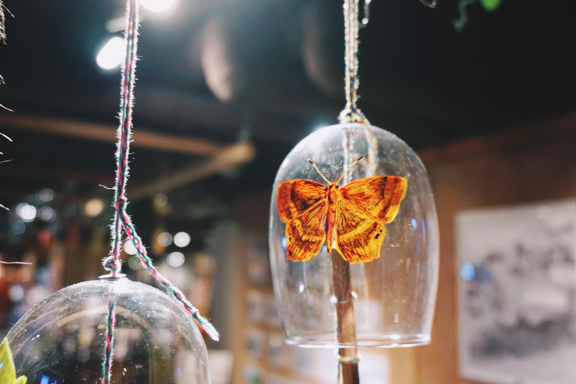 【藝遊展覽】昆蟲好靚?本地畫家「山有文西」的蝴蝶印記——《願山.蟲鳴》山系風鈴祭