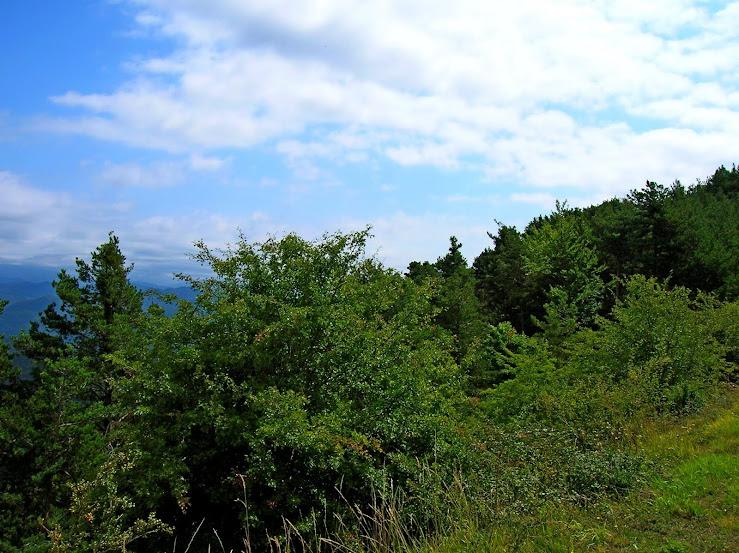 Un paseo por las nubes de Los Pirineos.. Los%2BPirineos%2B2014%2B070