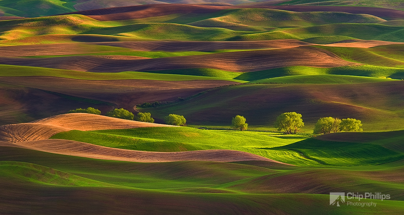 Pics of places that look like places from the films, or are just nice. [2] - Page 5 Row+of+Trees+Palouse
