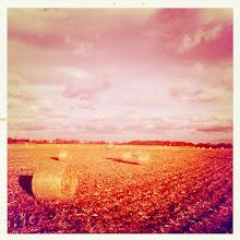 Photo: hay bales