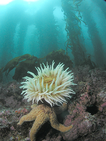 so does sea kelp bioferment live up to the if youu0027re looking for a film former and oil free emollient it will do just that