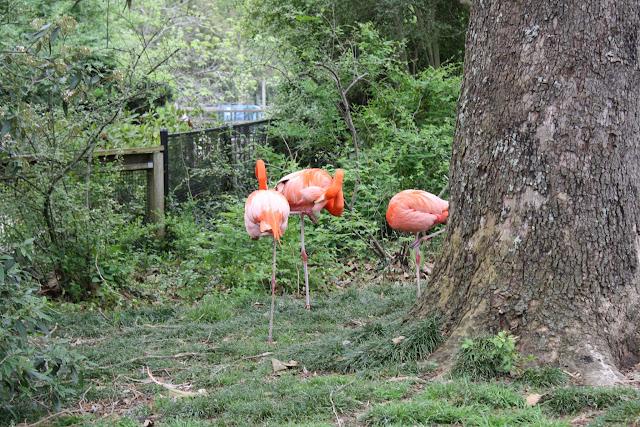 Zoo Snooze 2015 - IMG_7339.JPG