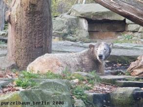 Photo: Knut nach der Schminkorgie ;-)