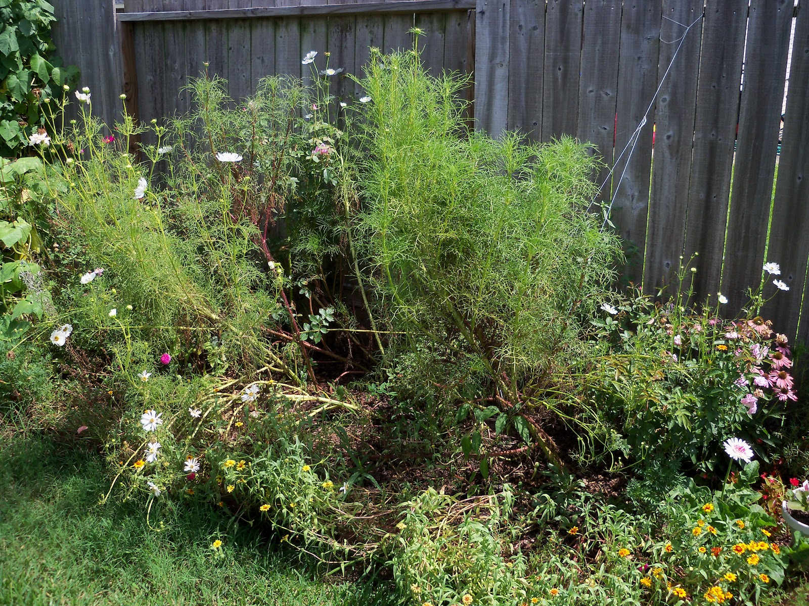 Gardening 2010, Part Three - 101_5069.JPG