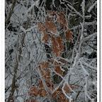 erdő, zúzmara 028.jpg