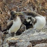 galapagos - Galapagos_FB_2-9.jpg