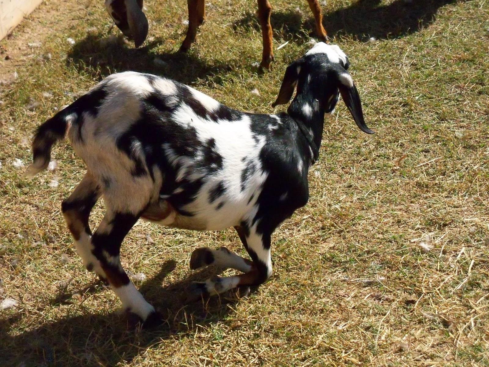 Blessington Farms - 116_5052.JPG