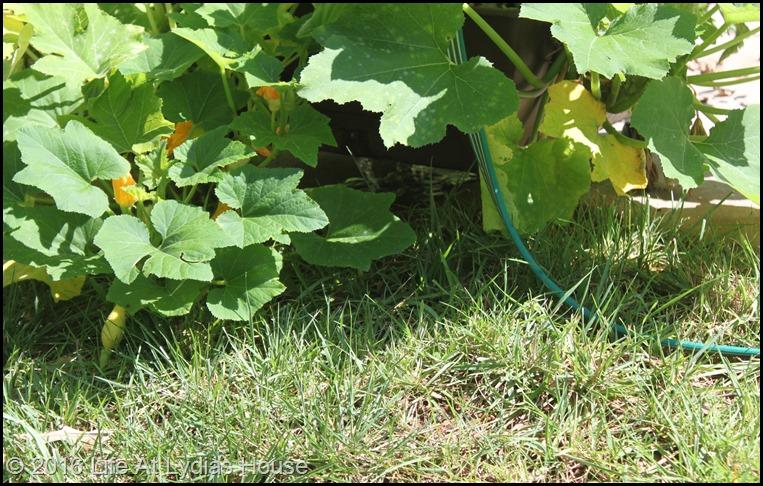 mini garden August - 3