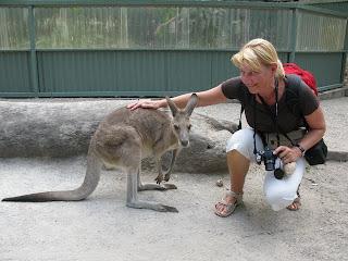 Druženje s kenguruji