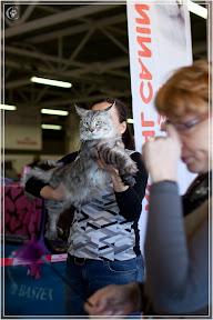 cats-show-25-03-2012-fife-spb-www.coonplanet.ru-005.jpg
