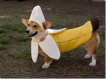 disfraces divertidos para perros  (13)