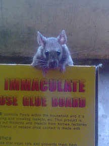Mouse Trap Escape Room Promo Code
