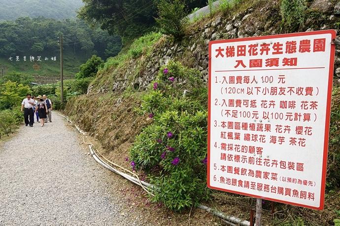 5 陽明山 繡球花 大梯田 竹子湖