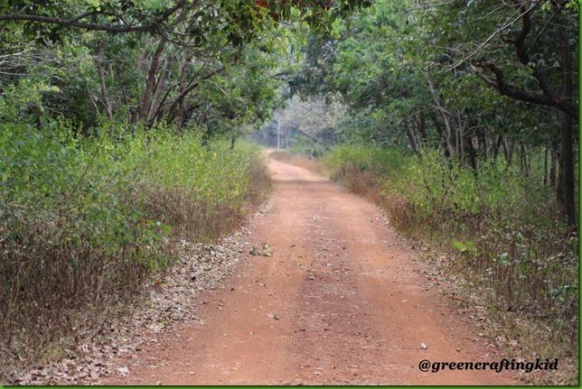 Safari-Trail