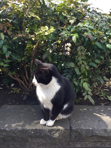Ueno street cat