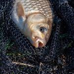 20150427_Fishing_Prylbychi_048.jpg