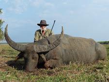 Mr Tanos again with a big bull on the floodplains at Carmor Plains, Australia Wide Safaris.