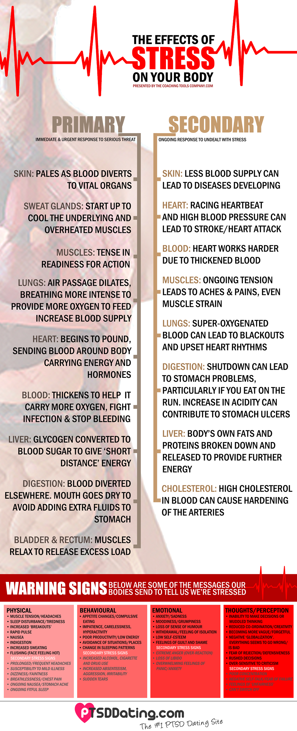 The Effects Of Stress On Your Body [PTSD] [Infographic]