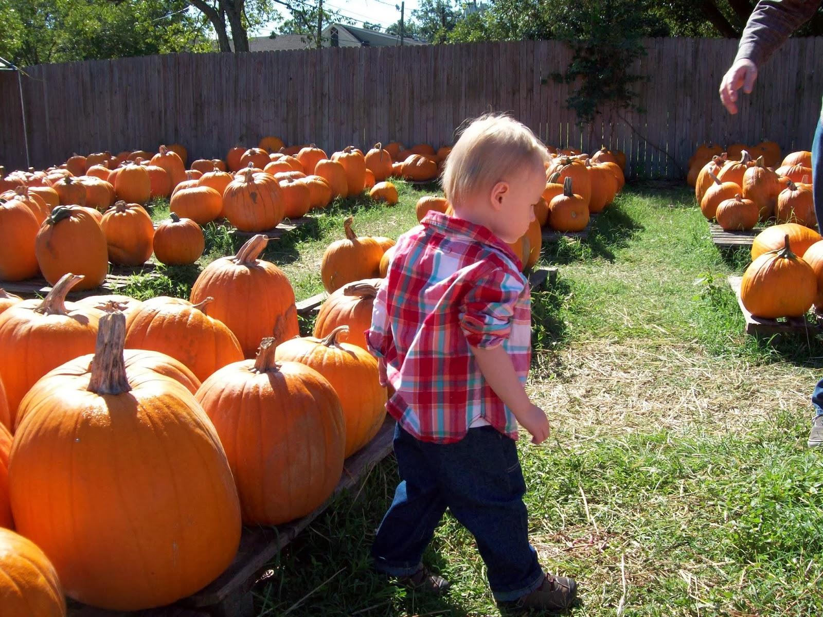 Pumpkin Patch - 114_6543.JPG