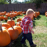 Pumpkin Patch - 114_6543.JPG
