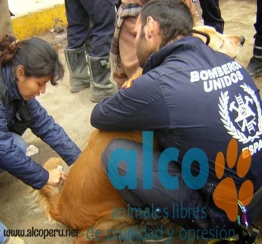 1era visita asistencia animales damnificados terremoto  Pisco 2007 (18)