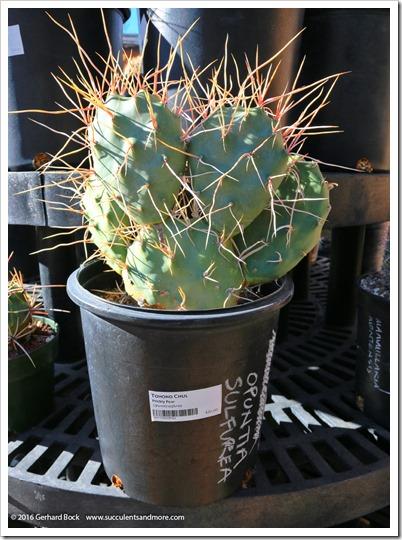 151230_Tucson_Tohono-Chul-Park_0081