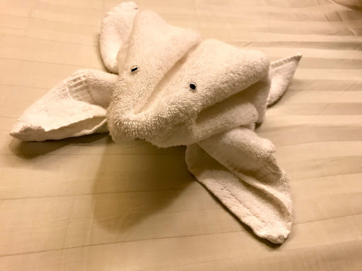 frog-towel.jpg - A frog towel left for guests during turndown service on ms Oosterdam.
