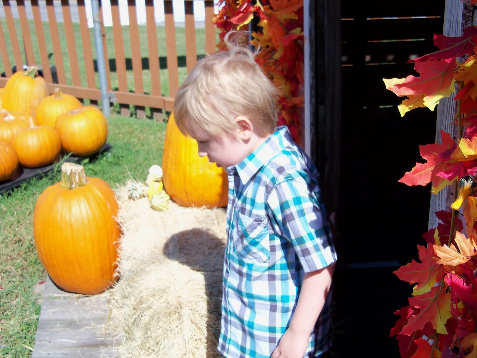 Pumpkin Patch 2015 - 100_0425.JPG