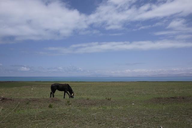 horse near Qinghai lake