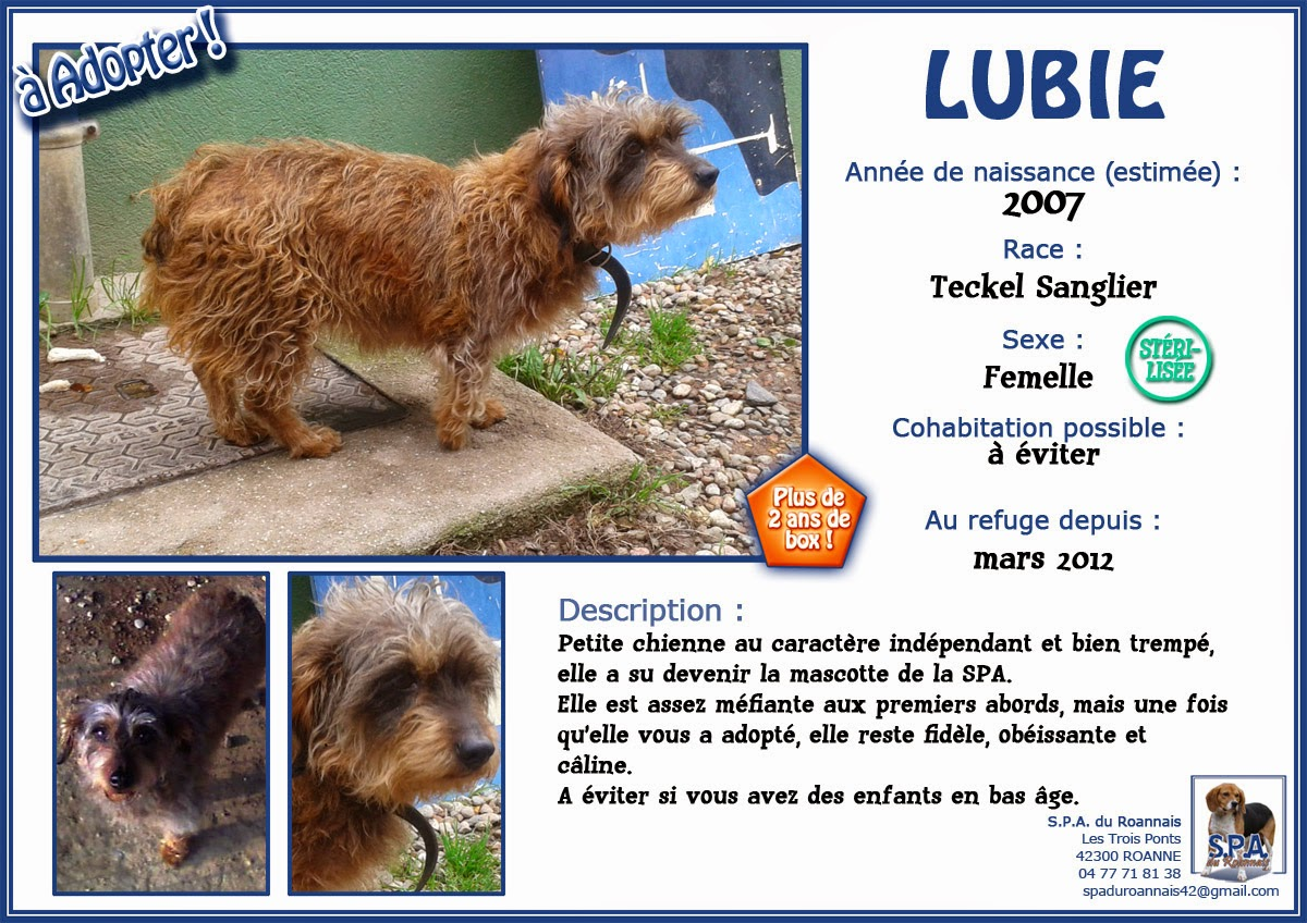 LUBIE  -  Teckel  10 ans  (5 ans de refuge)   SPA  DE  ROANNE  (42) Fiche-LUBIE-2007