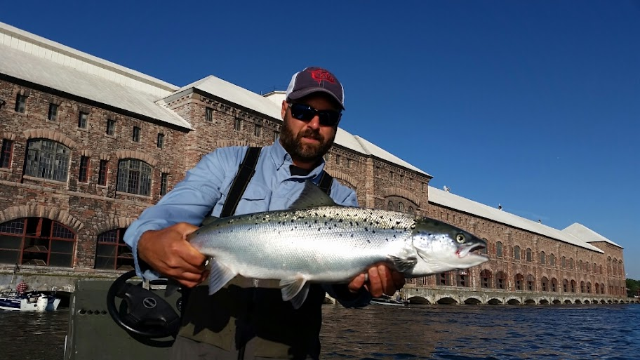 st. mary's river atlantic salmon
