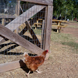 Blessington Farms - 116_5082.JPG