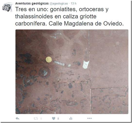 Tweet fósiles Oviedo
