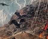 Doom Birds