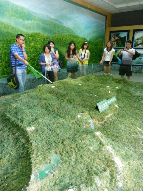 la mer de bambous