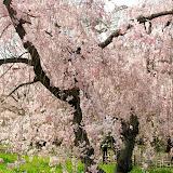 2014 Japan - Dag 10 - janita-SAM_6581.JPG