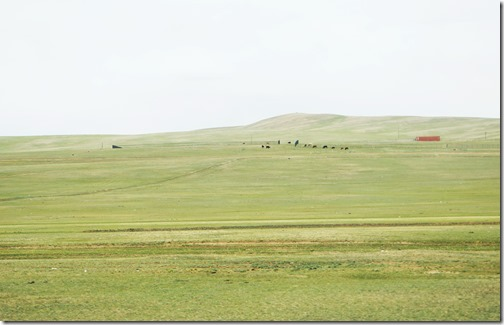 Mongolia31