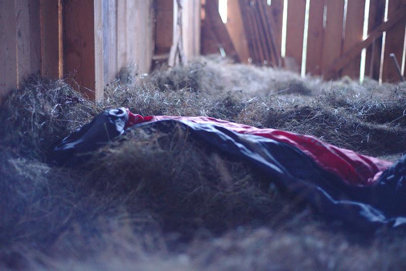 De dimineata, inainte de culesul prunelor, incercand sa gasesc o incadrare mai fericita a patului inmiresmat.