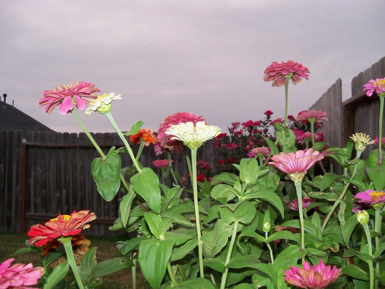 Gardening 2011 - 100_8752.JPG