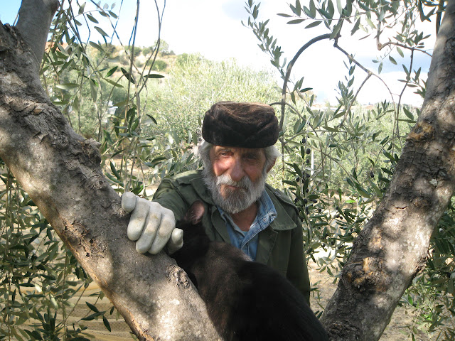 Tuscan master olive picker and cat